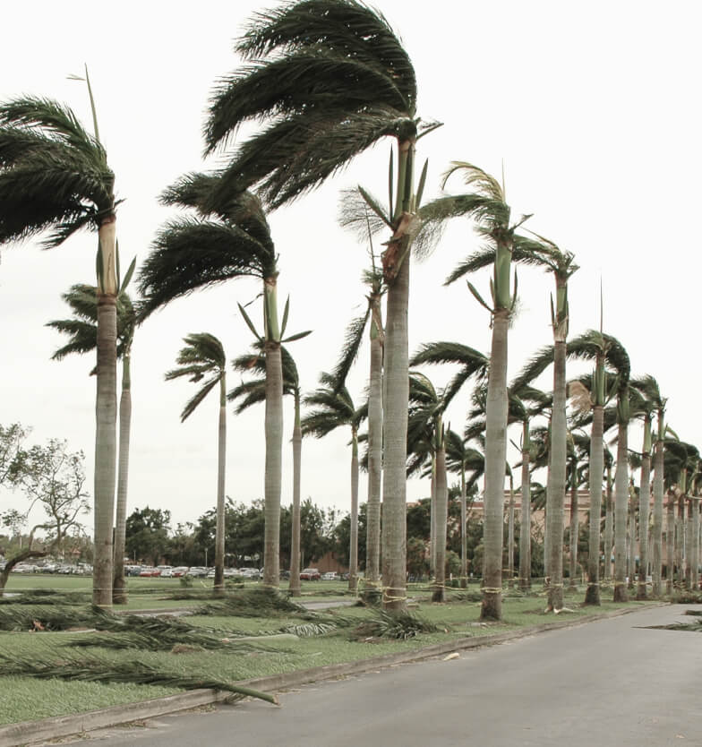 palm trees swaying in storm